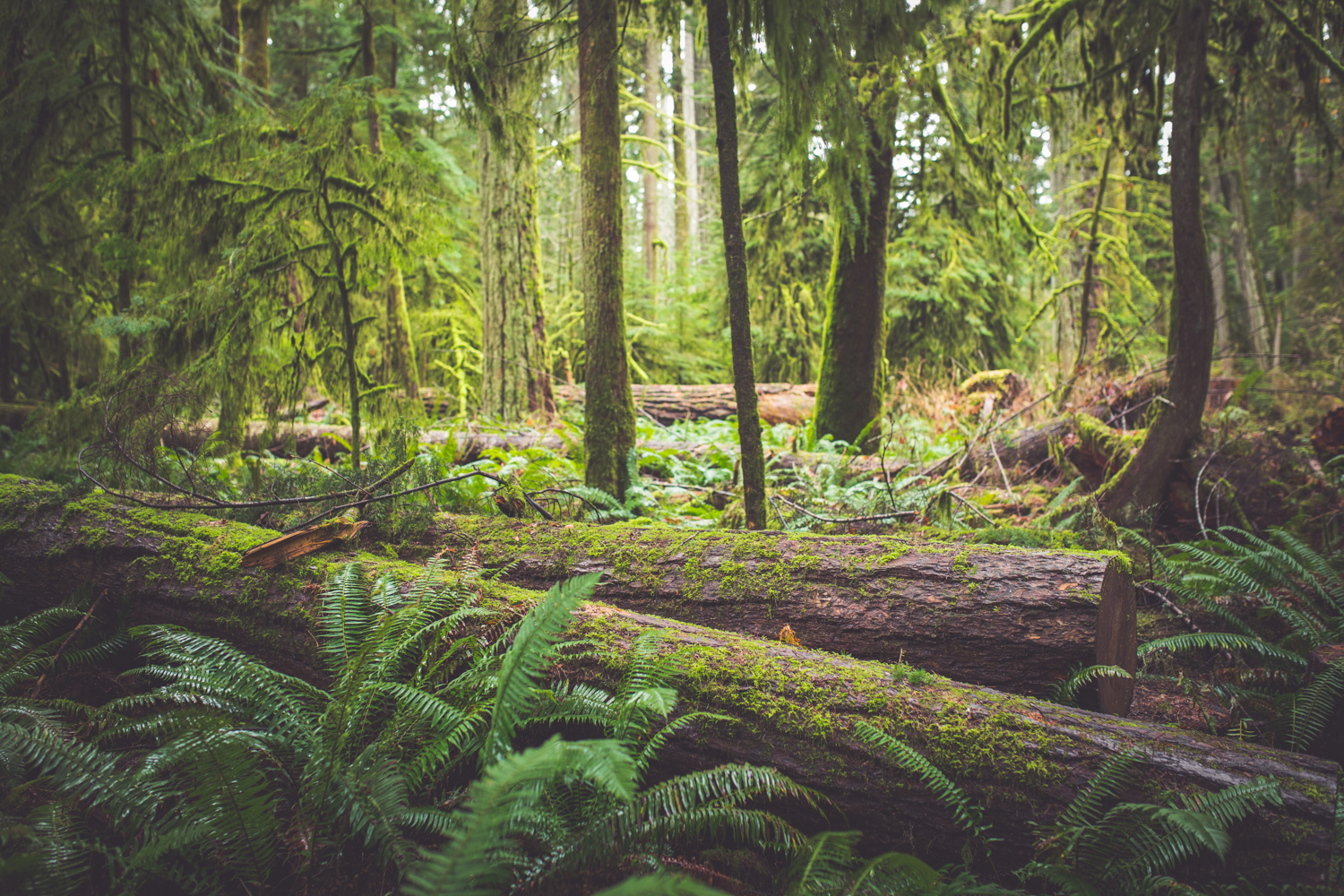 cathedral-grove-elopement-photos-3.jpg