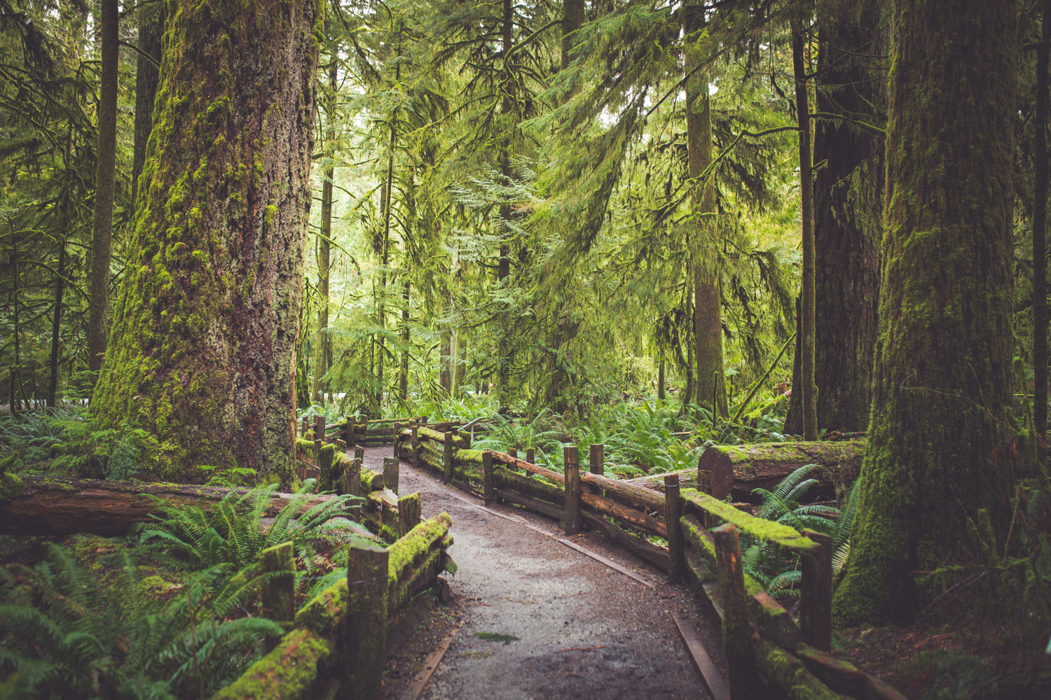 cathedral-grove-elopement-photos-2.jpg