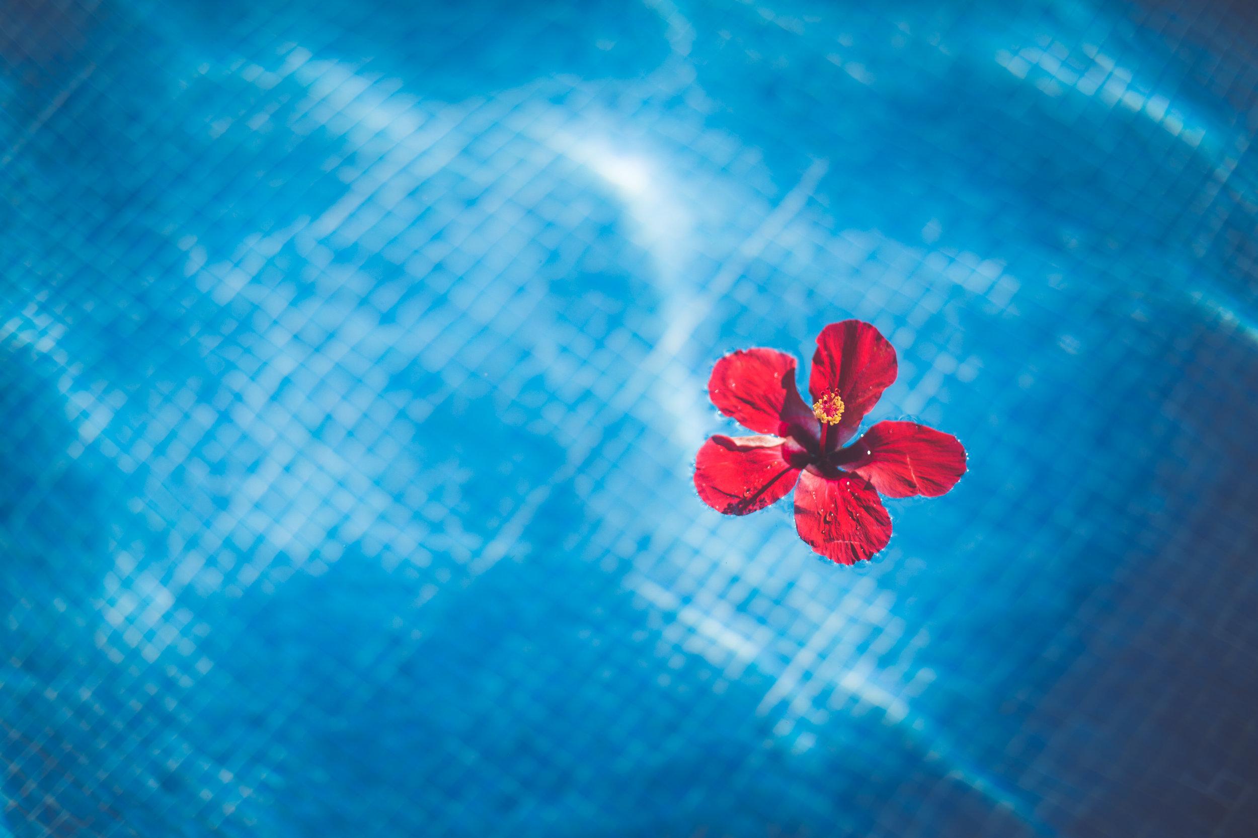 hibiscus flower at sunset princess resort wedding in playa del carmen mexico