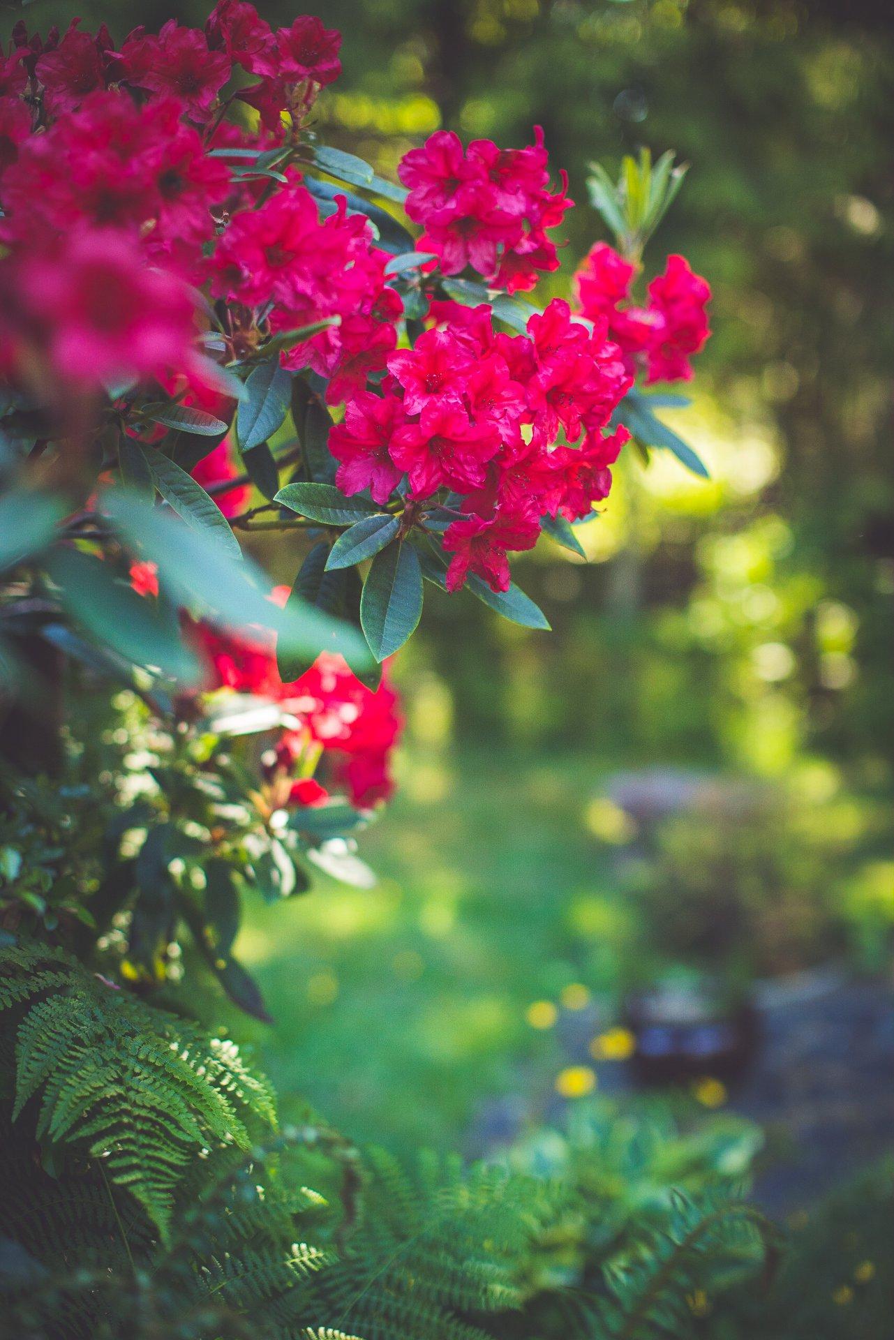 Vancouver Island gardens