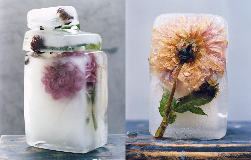 herbs in ice.jpg