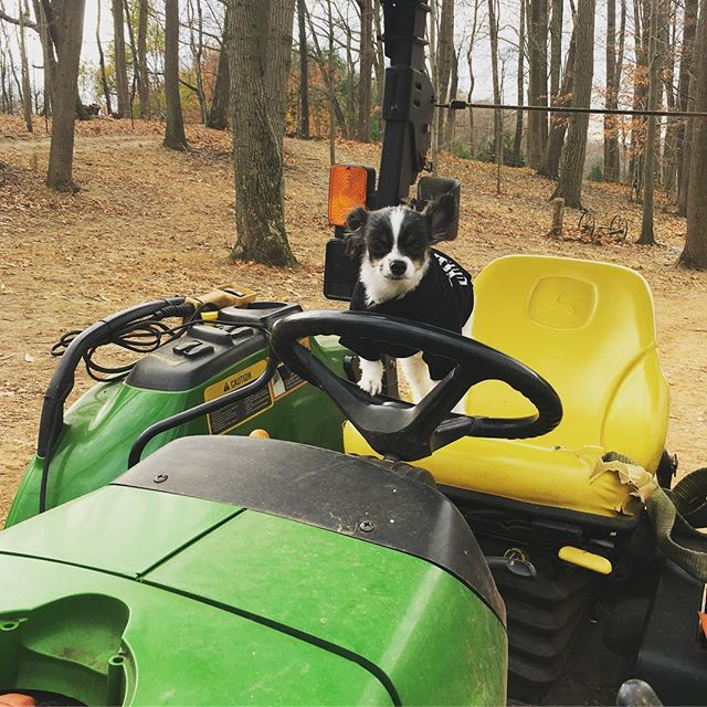 """No big deal but we got to hang out with the coolest chihuahua we know, @ipartywithbrucewayne  Bruce came up with his """"parents"""" today and we even put him to work...he's a great tractor driver!  #jakeslegacyfarm  #grassfedbeef #grassfed #farm #mdfarm #mdfarms #marylandfarm #marylandfarms #farmlife #farmer #november #mdinfocus #visitmaryland #harfordcounty #harfordcountymd #chihuahuasofinstagram #chihuahua #maryland #johndeere #dogsofinstagram"""