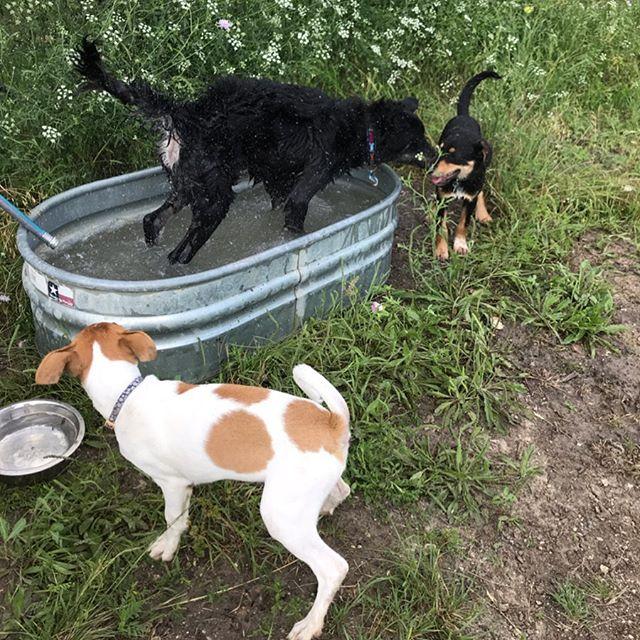 Puppy trio.  #counttydogservices