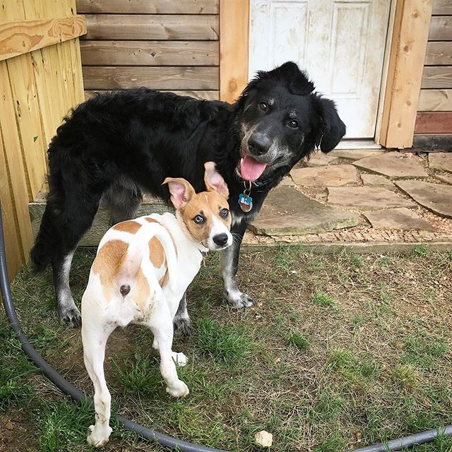Henry and Winnie.  #countrydogservices