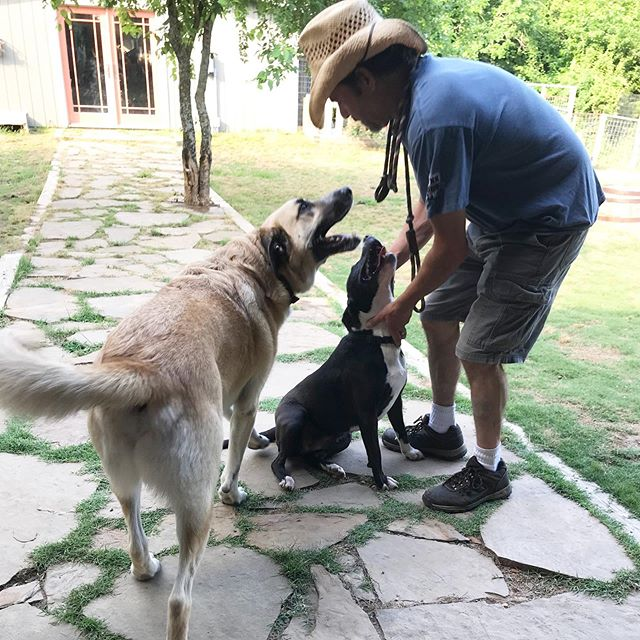 Elli and Jax.  #countrydogservices