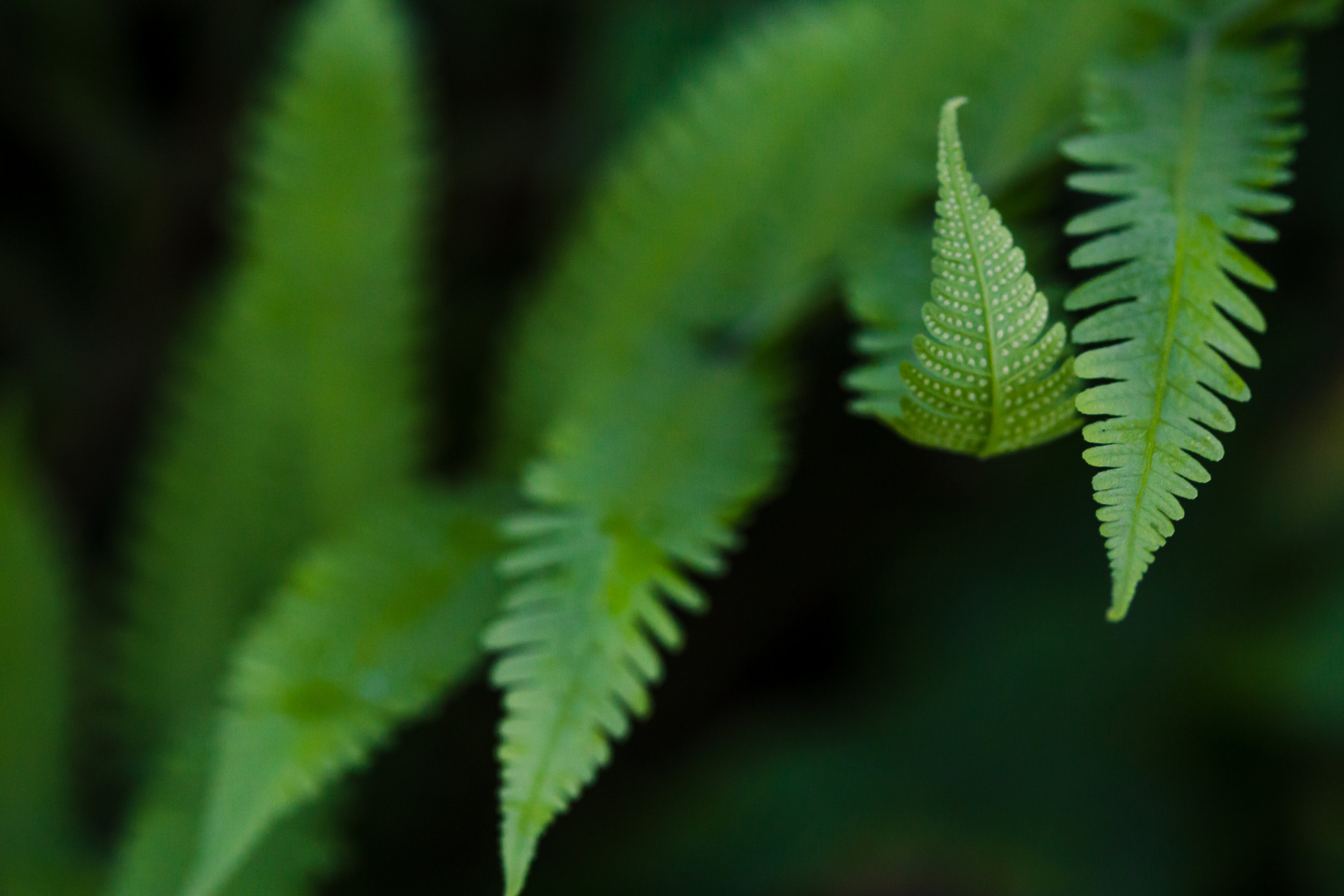 Wild Fern Finger