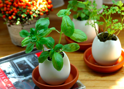 Eggling Hatchable Plants  from Intaglia Home & Garden