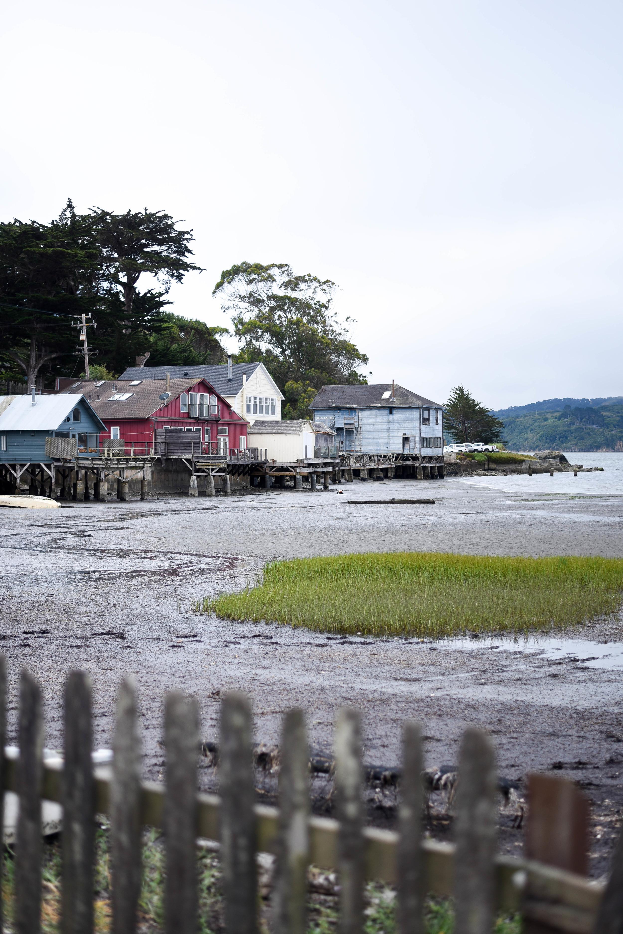 Visit Hog Island Oyster Farm in Marshall, Ca | asavvylifestyle.com