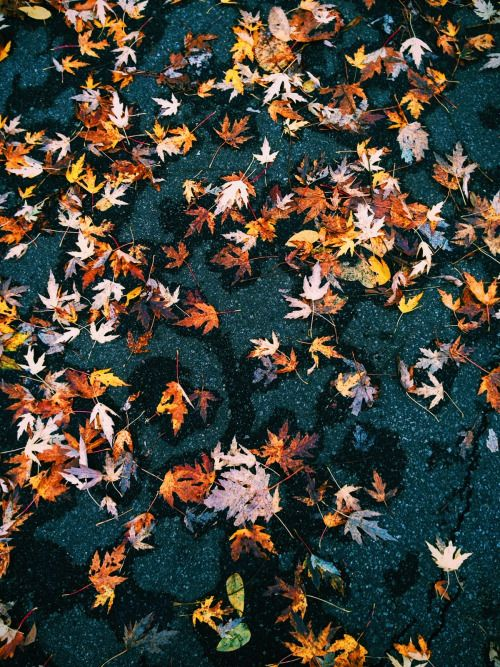 fall leaves ground seasonal orange