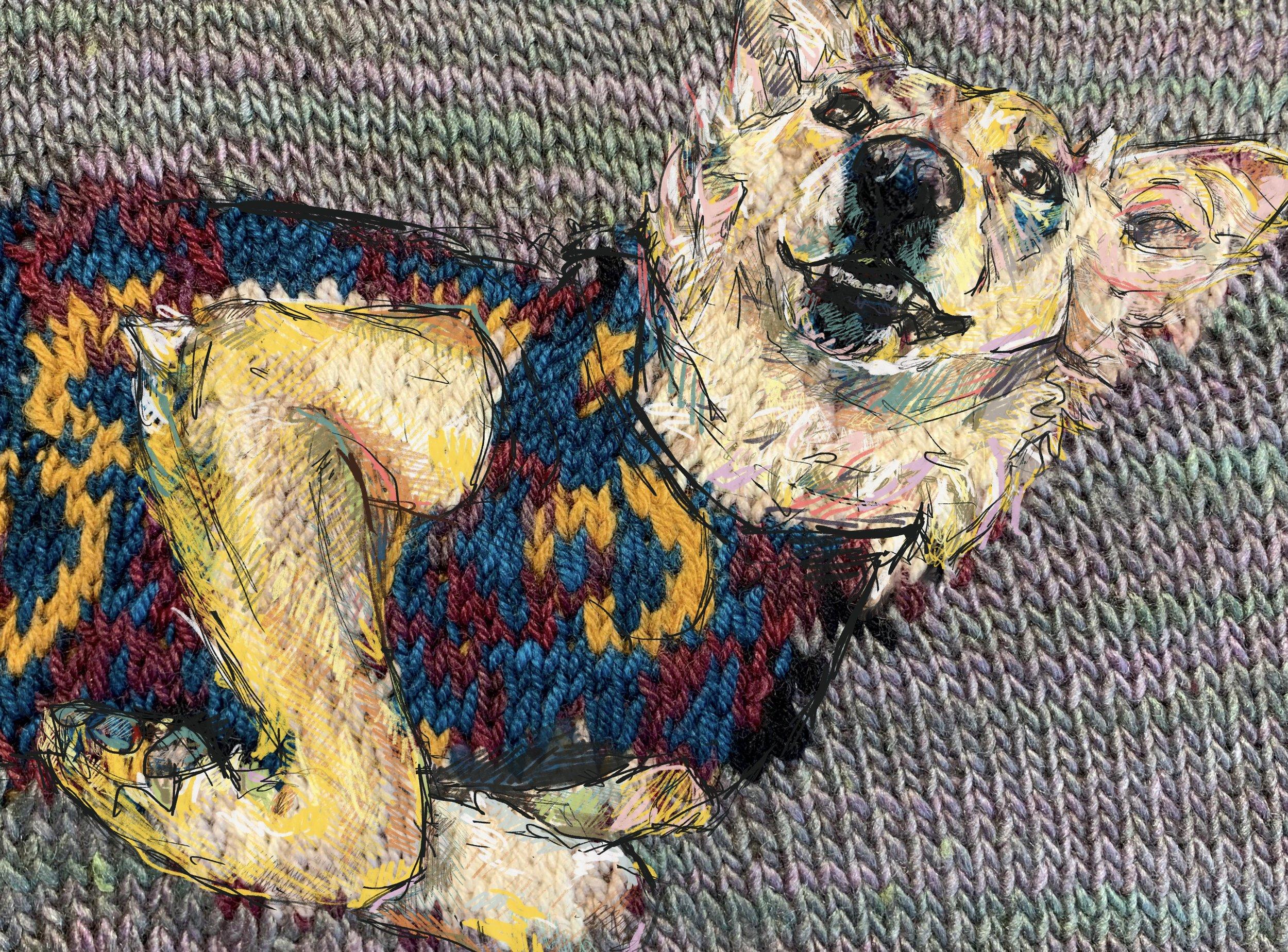 faith portrait pet dog shelter dog knit knitting sweater.jpg