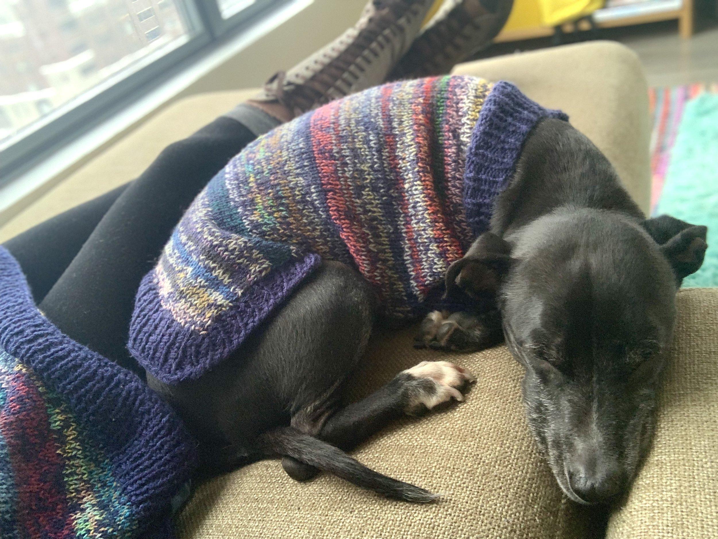 knit sweater.jpg