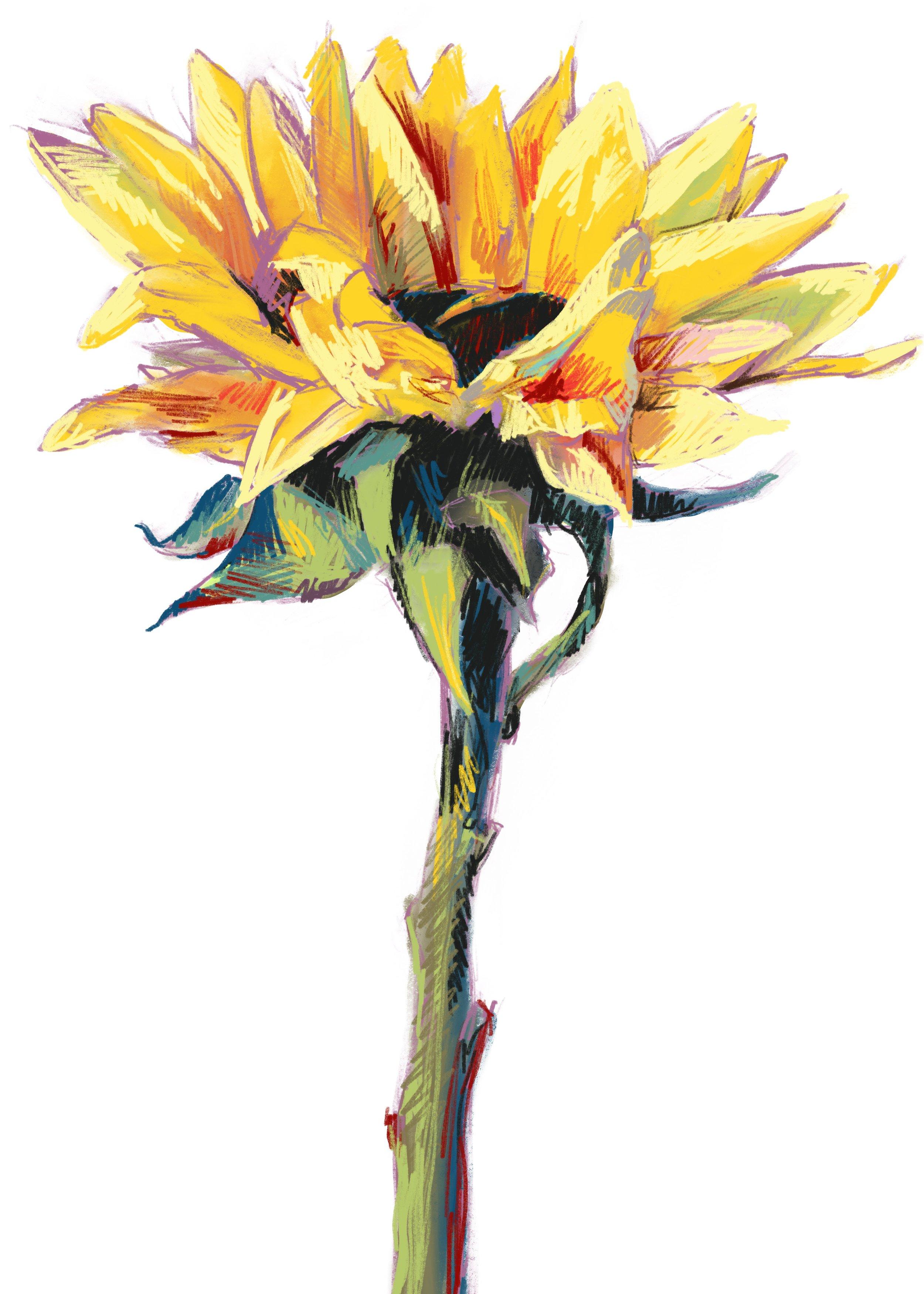 faith sunflower drawing.jpg