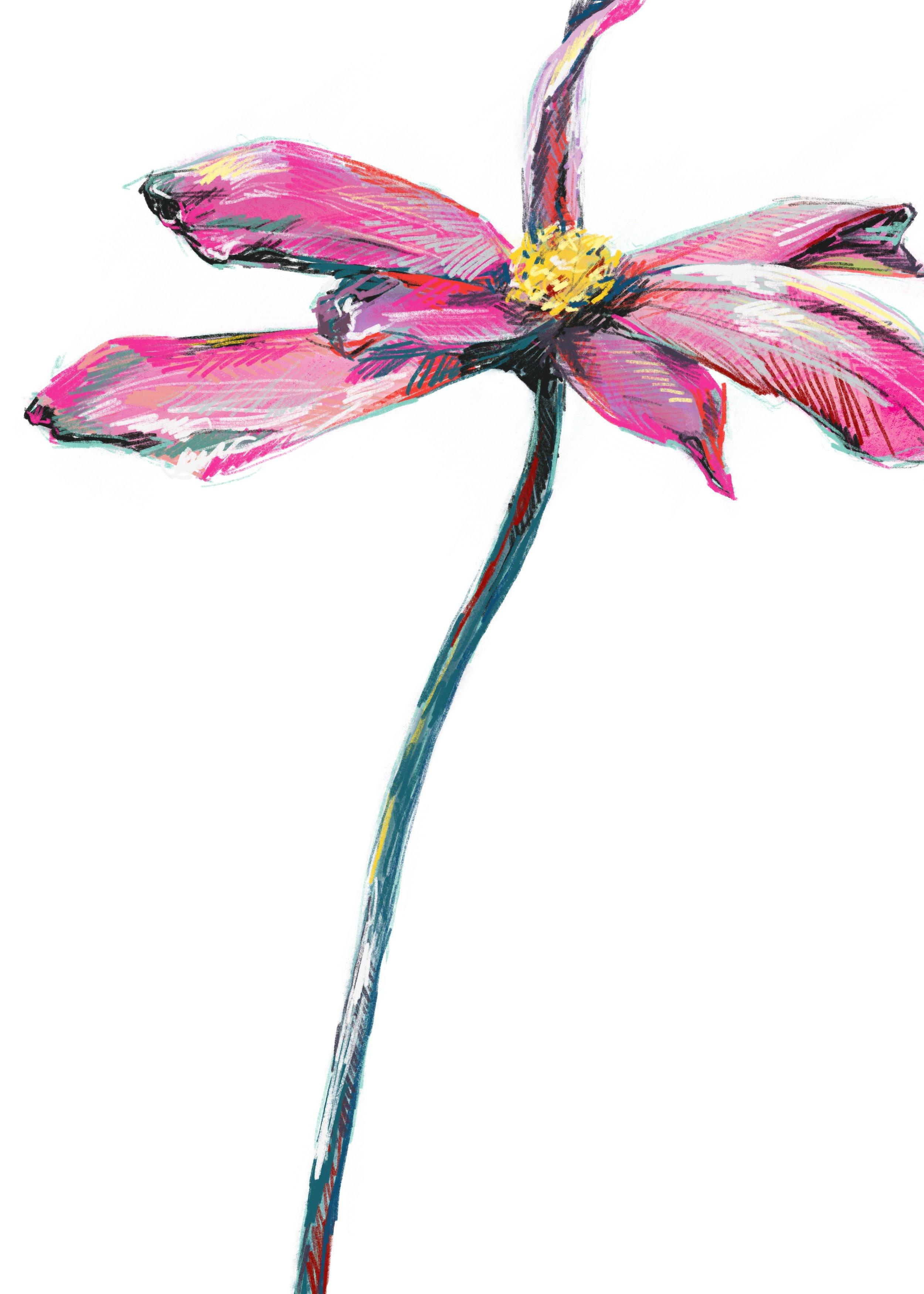 faith flower illustration.jpg