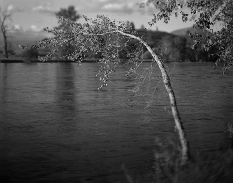 Cottonwood+leaning+-+Bitterroot+River_1996.jpg