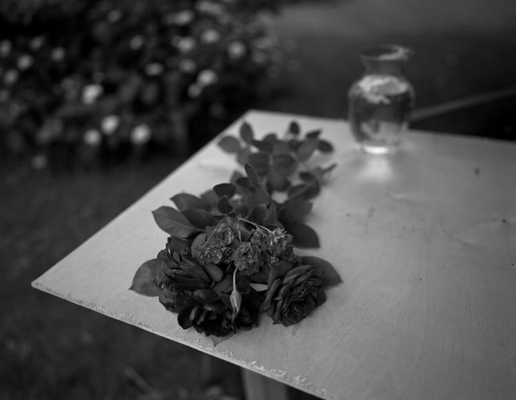 Cut+Roses_2001.jpg