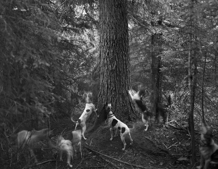 Hounds+at+tree,+Lochsa+River+Valley_1992.jpg
