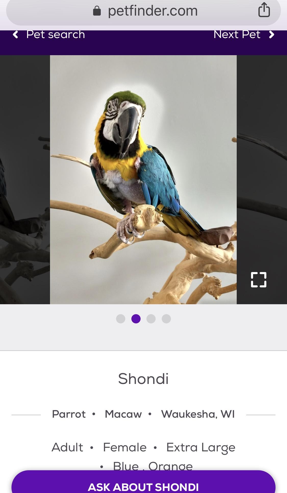 shondi+parrot.jpg