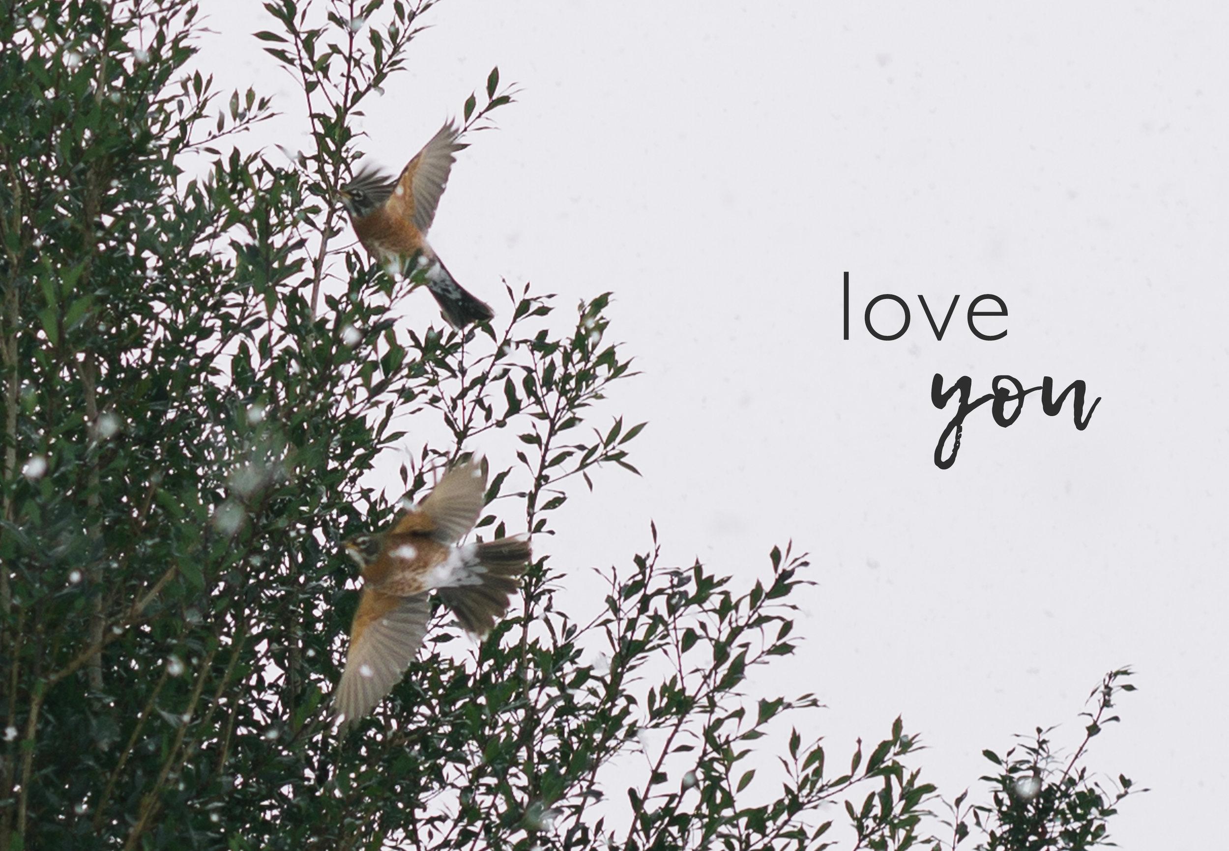 birdspostcardfront.jpg