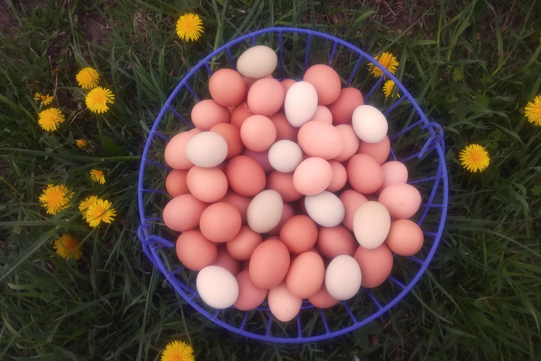 DaSilvaFarm_EggBasket_BlueEggs_WARM_WEB.jpg