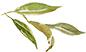 leaf26.jpg
