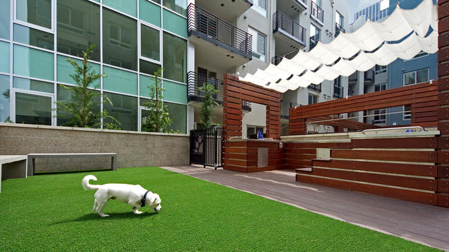 """At the Camden in Hollywood, a """"dog den"""" features a dog wash with a drying station and an off-leash gated space on the rooftop for canines and their owners to socialize; water bowls and treats are available throughout the property. (Darius Jenkins)"""