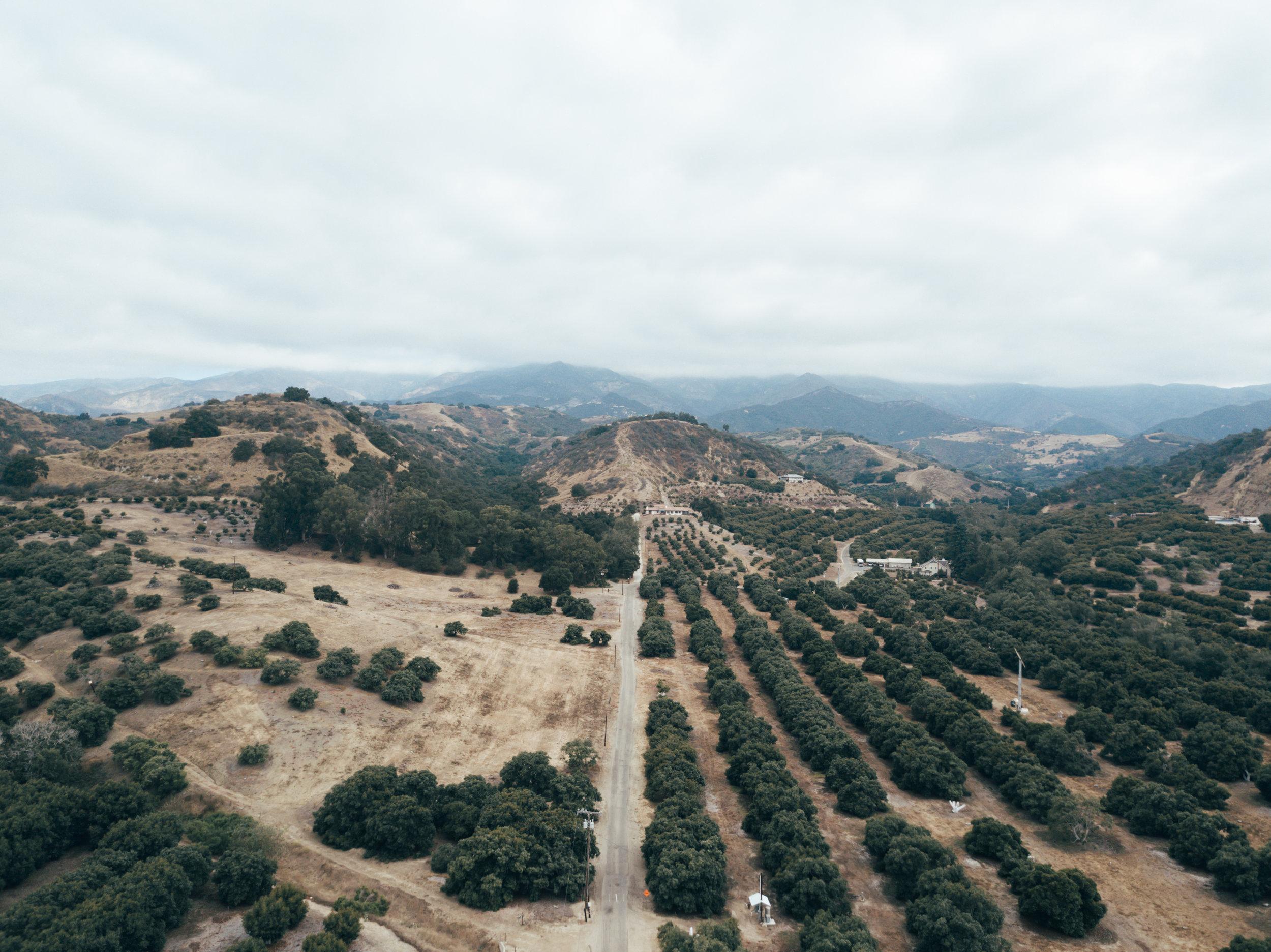 Stay_Driven_Monterey_Car_Week_1-1.jpg