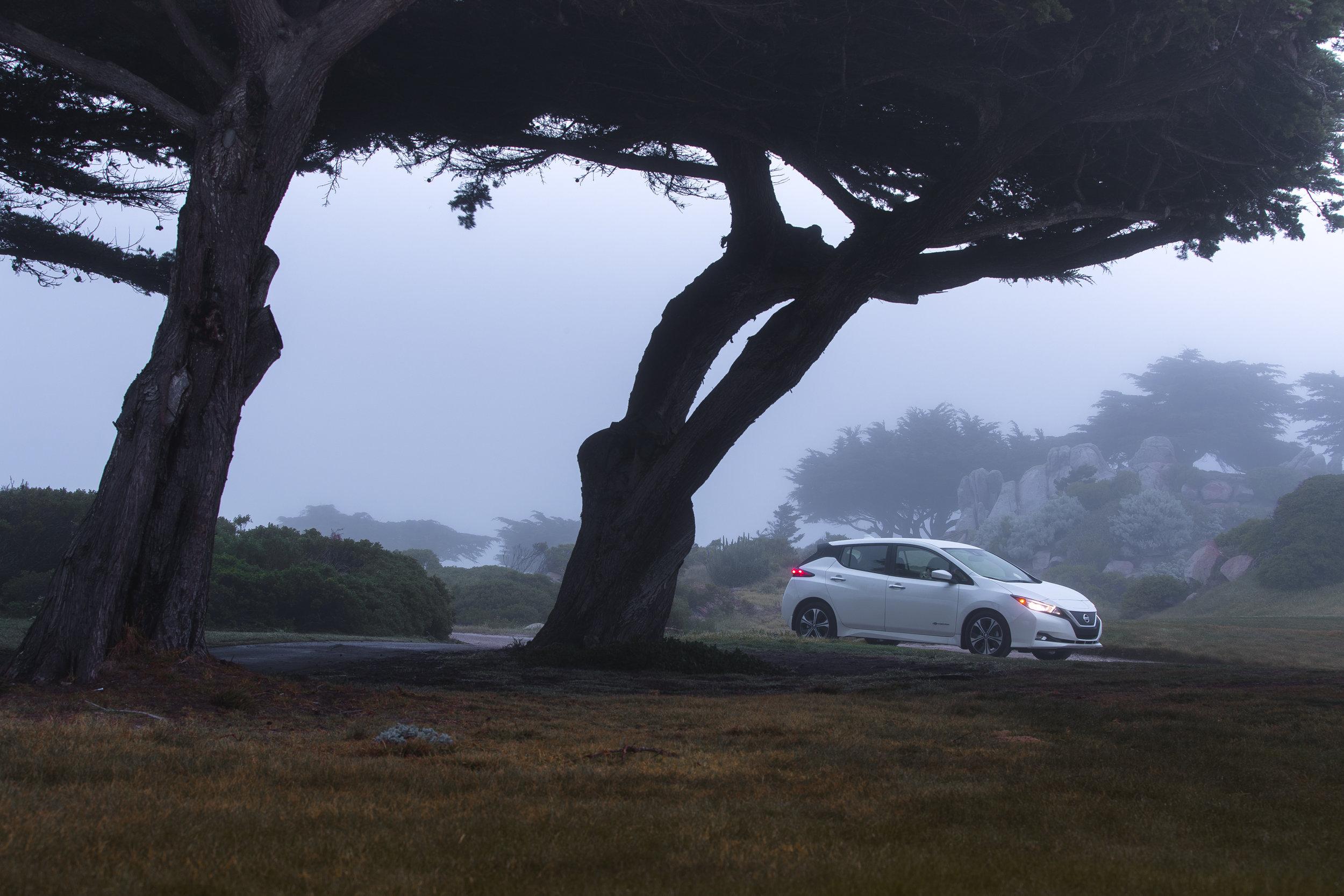 ABE1_LEAF_Monterey-4.jpg