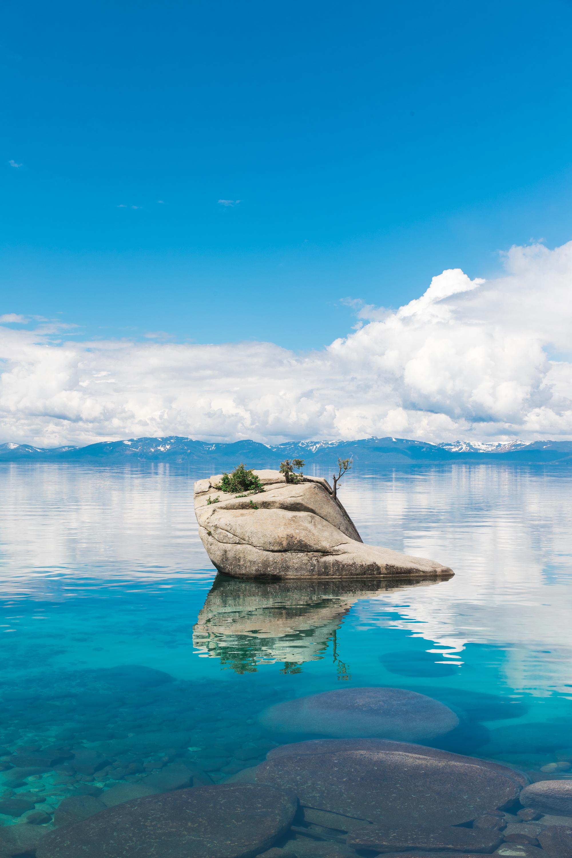 ABE1_Lake_Tahoe_Bonsai-1.JPG