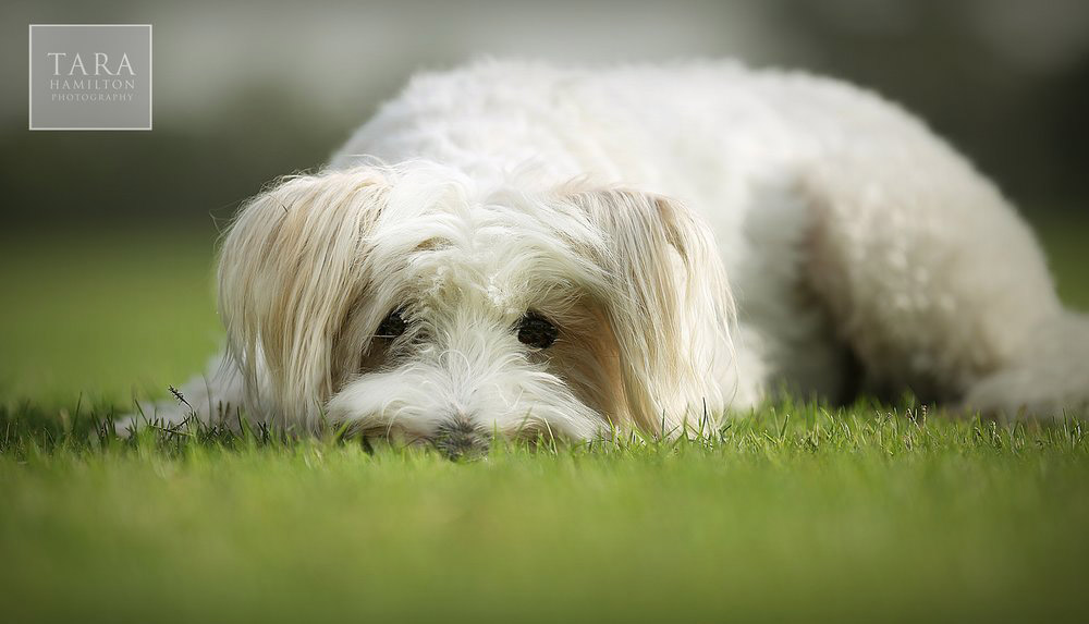 Dog+13.JPG