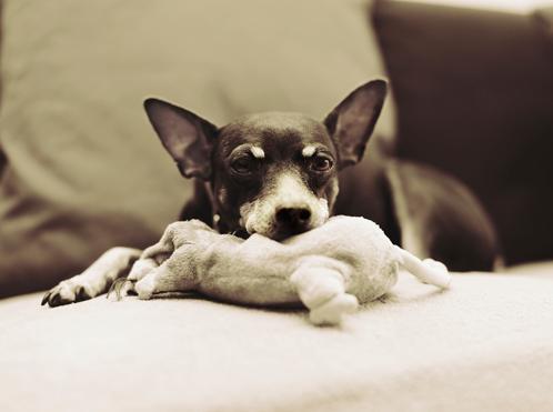 Tails Dog 2.jpg