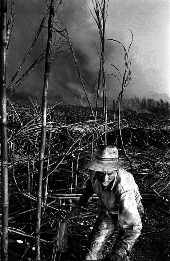 sugarcanes04.jpg