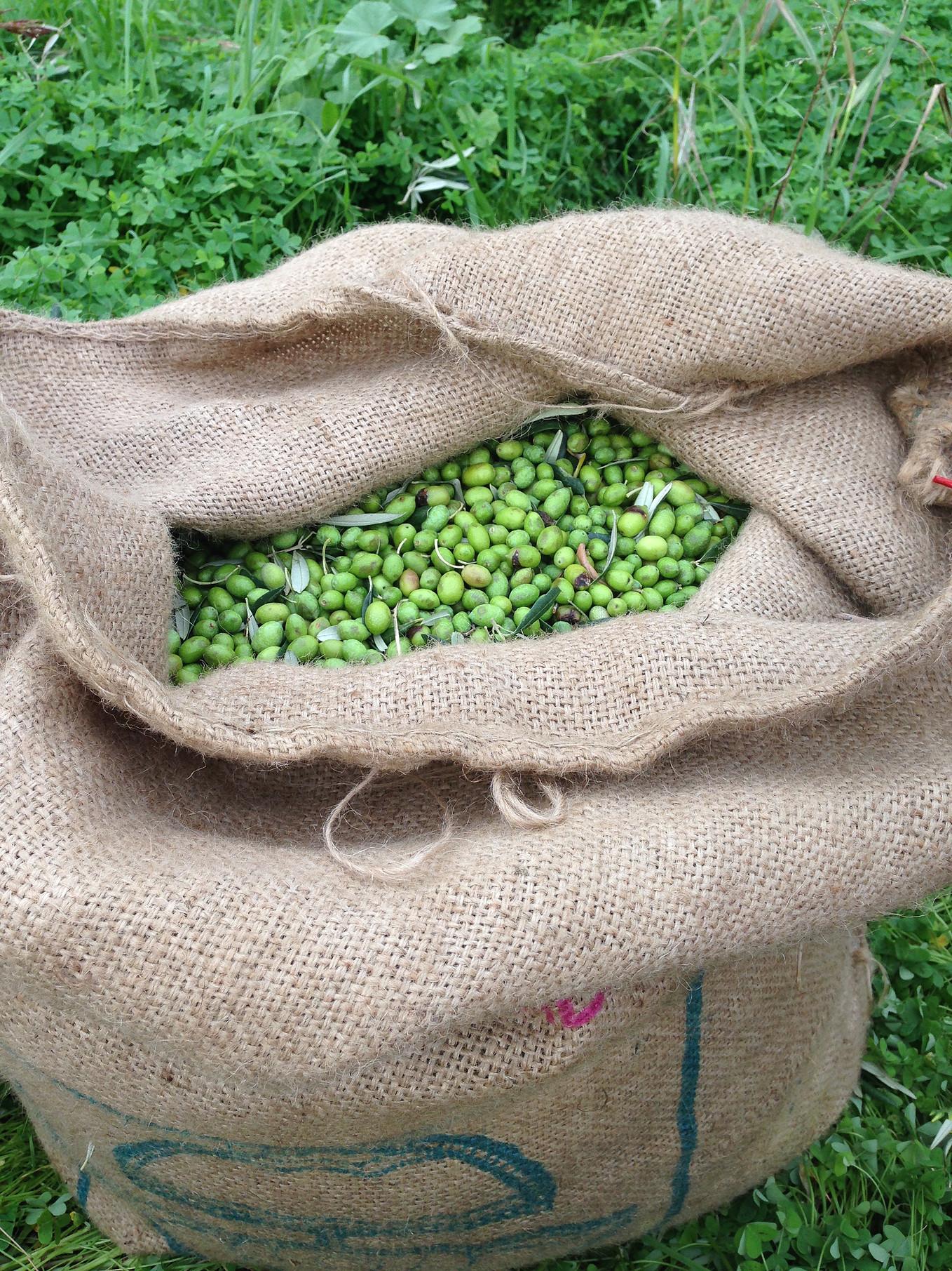 sack of olives