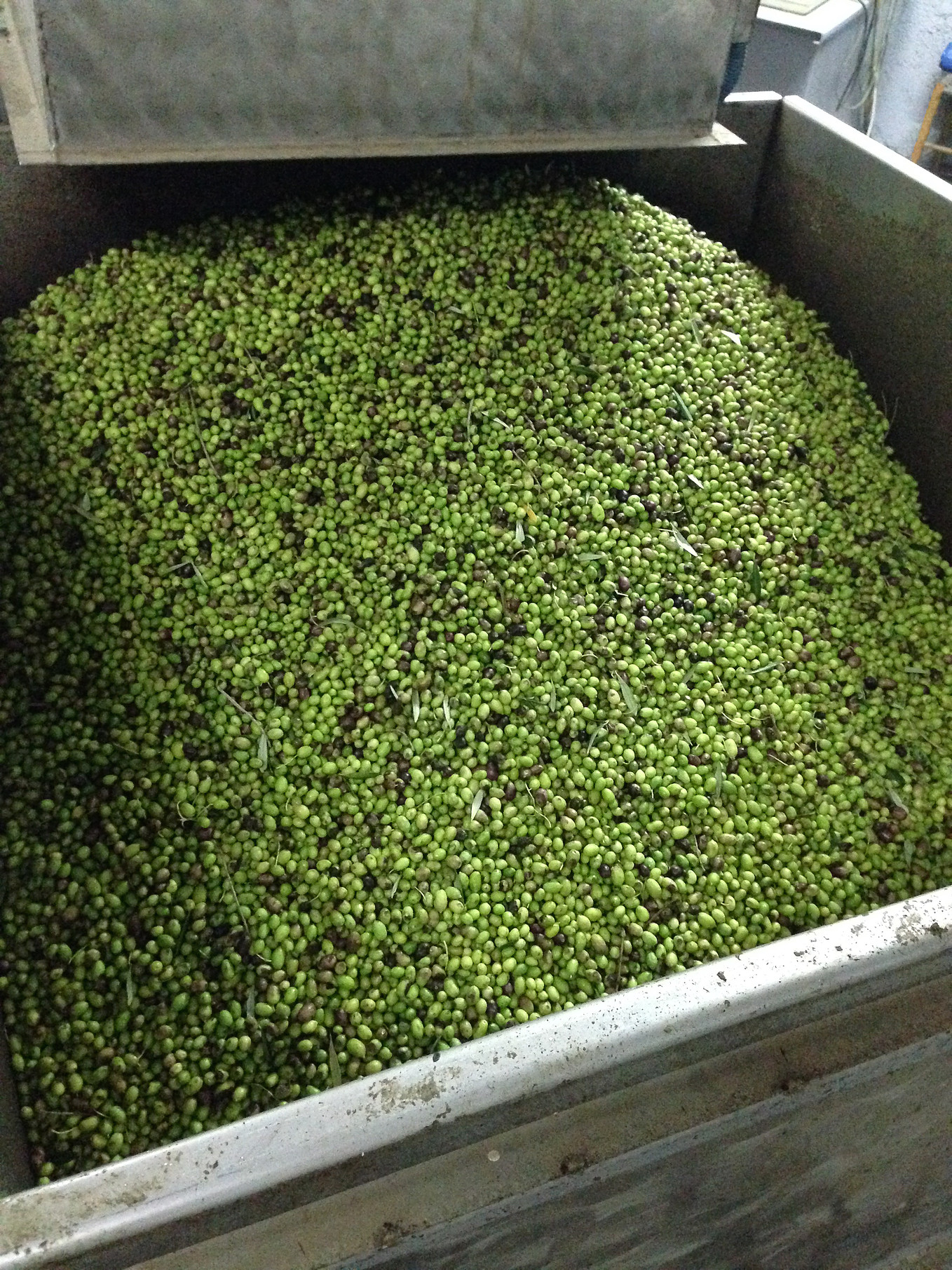 olive factory
