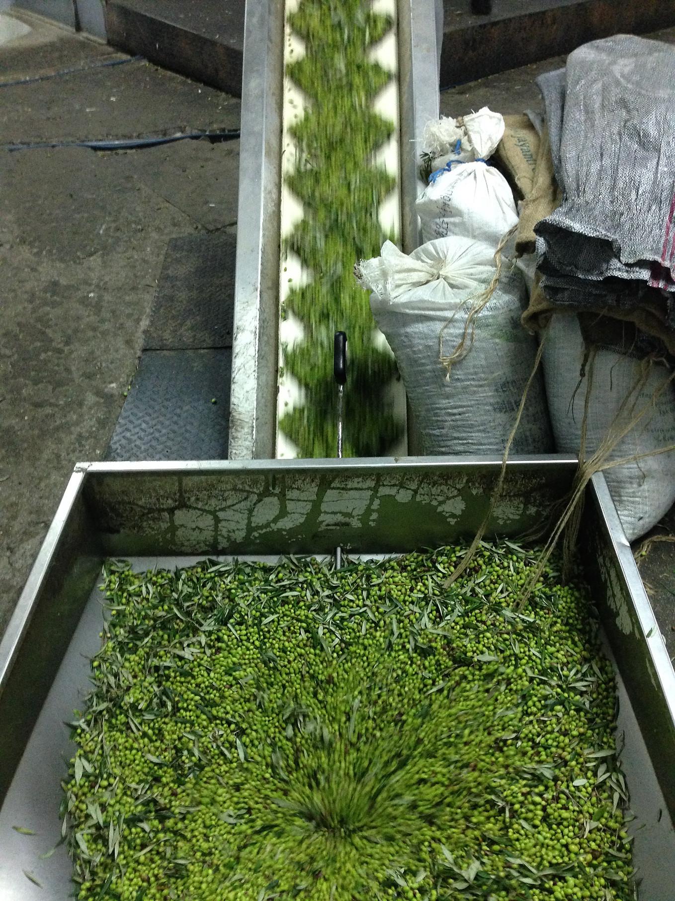 moving olives