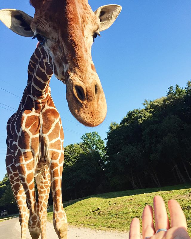 I'd say this was the best moment of my weekend 🦒 🥰