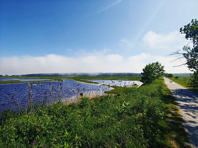 Fog rolling in on the marsh. . . . #scarboroughmarsh #maineaudubon #audobonsociety #maine #mainelife #maineoutdoors #mainething #mainetheway #livemaine