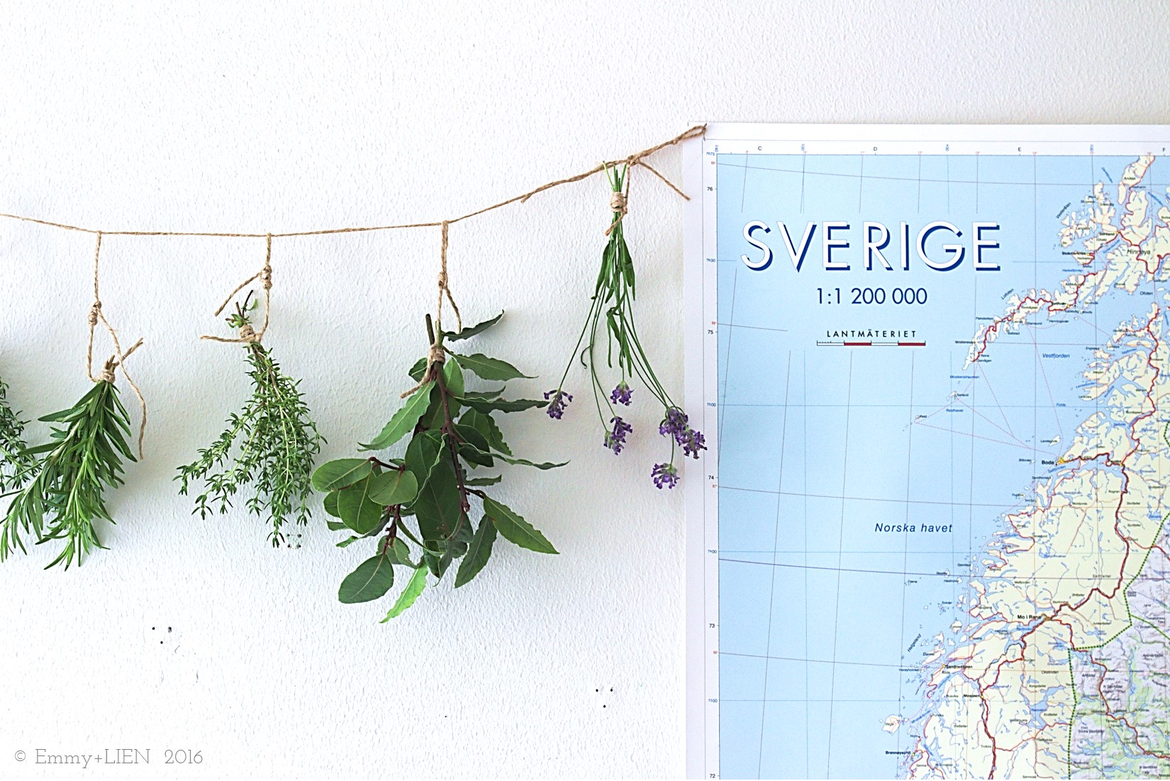 Herbs hung up to dry for winter || Life in Sweden