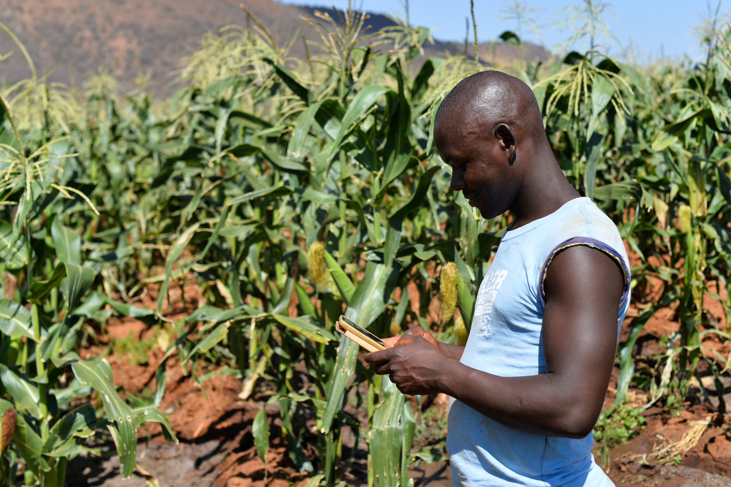 Digital Farming Kenya