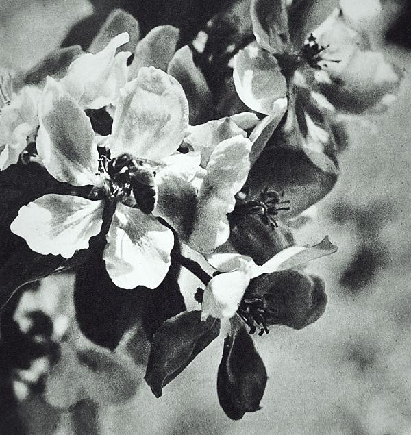 b22-design :     Flowers      Les Fleurs Noir du L'Hiver.