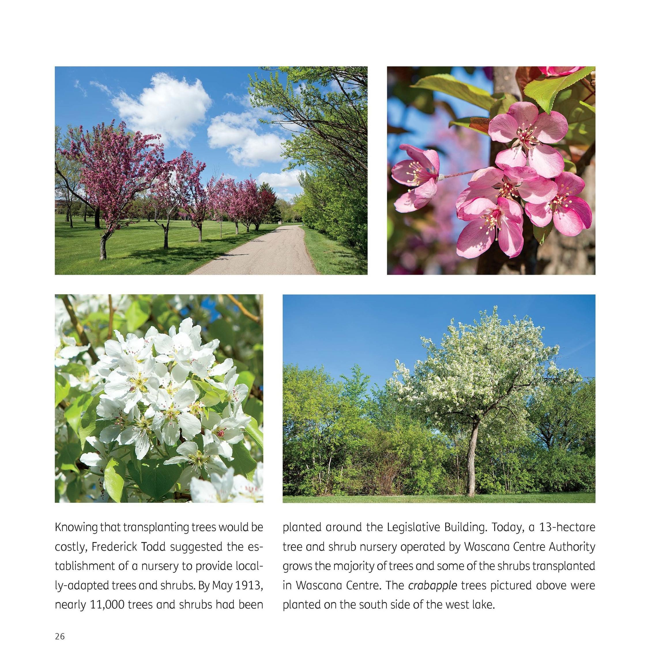 WLT4SBook-Page26.jpg
