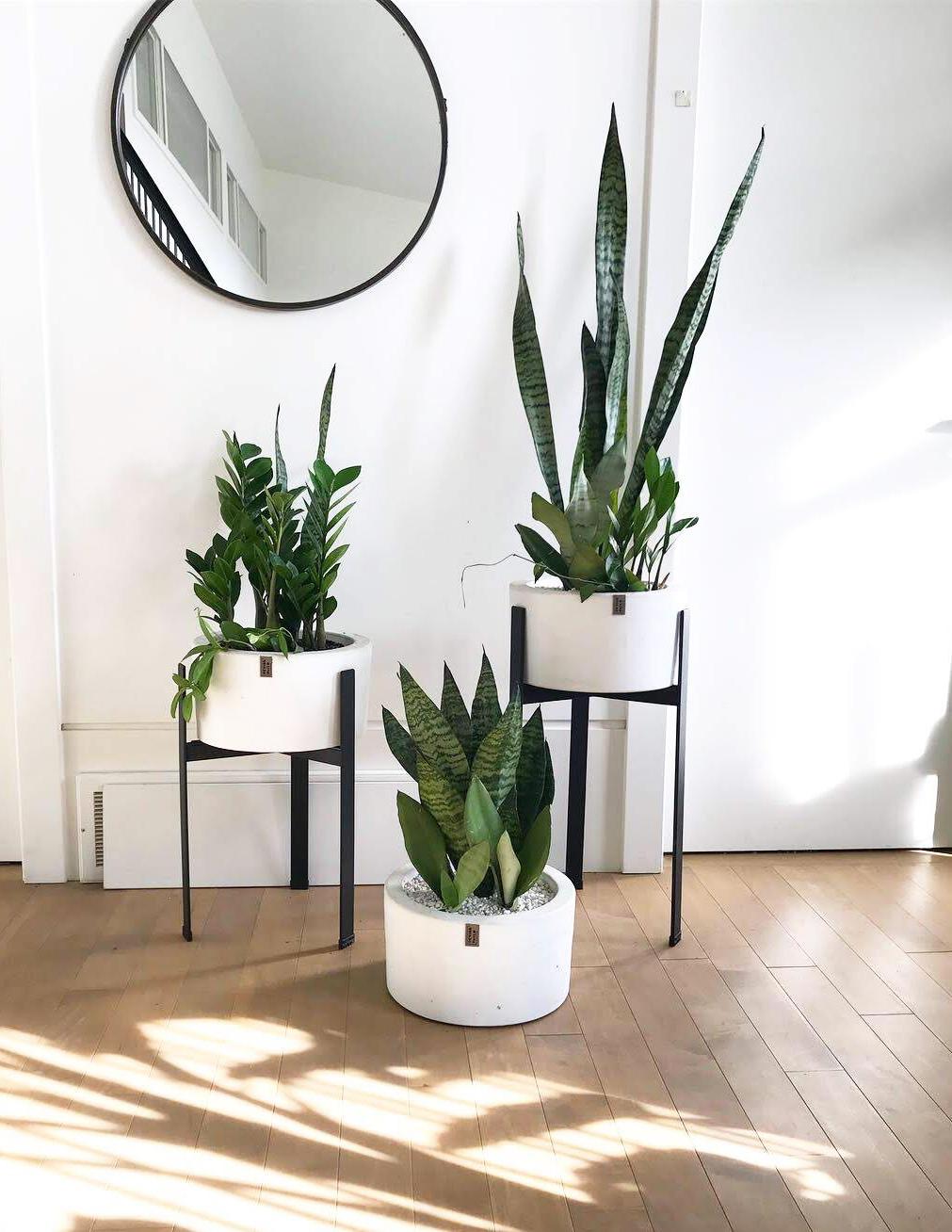 Design Build Plants