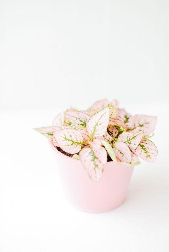 Image Source: Brit+Co, Fittonia plant (non-toxic)