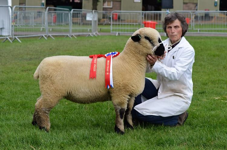 BREED CHAMPION THREE COUNTIES SHOW
