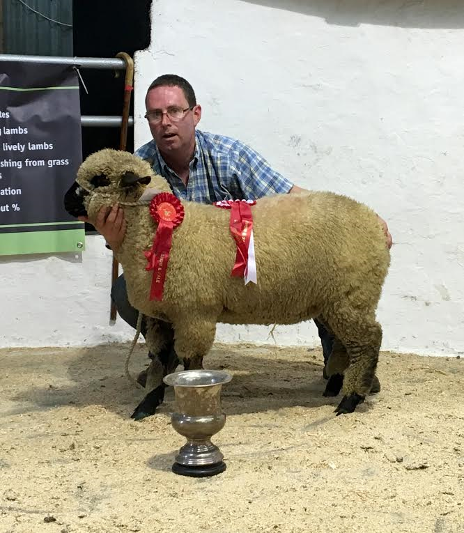 Best Opposite Sex to Supreme Champion 2016 Southern Ireland.png