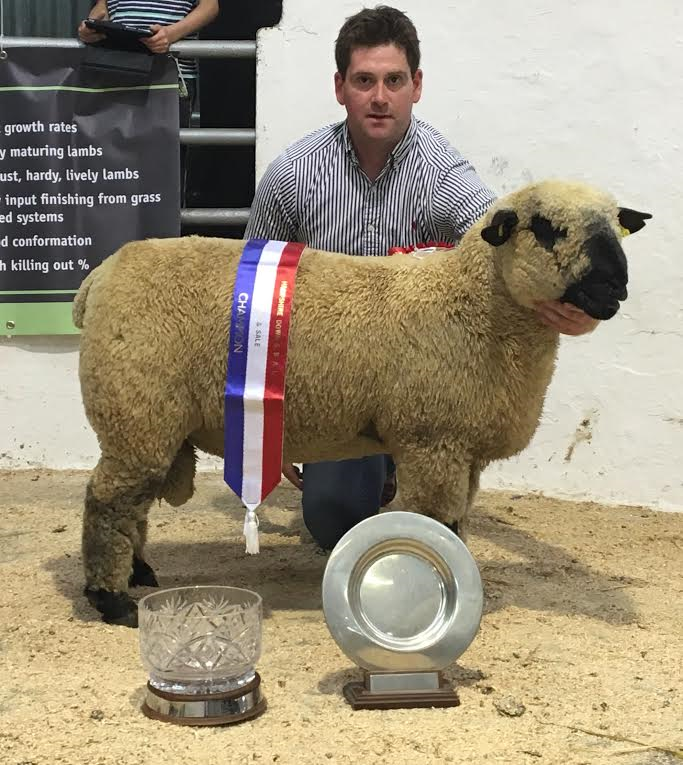 Supreme Champion Ram Lamb From the Power Pack Flock