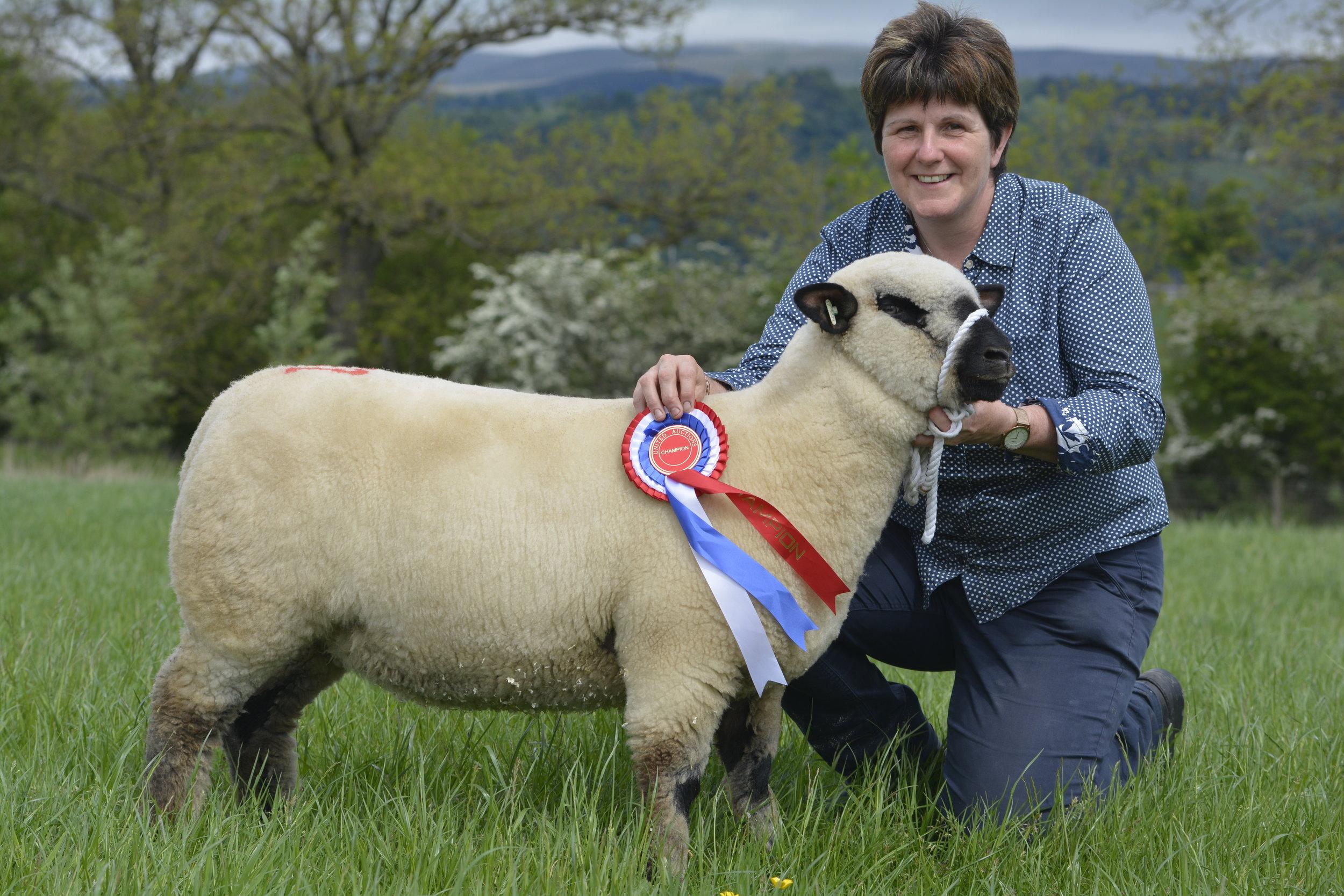 Reserve Champion - Ewe Lamb from G & J Galbraith, GRAYLEN