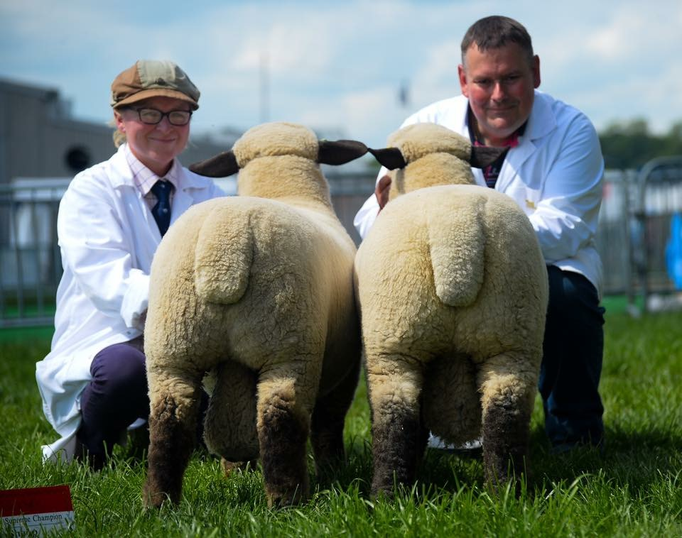 PARKSTOCK RAM LAMBS. Breed Champion and overall Reserve Supreme Champions
