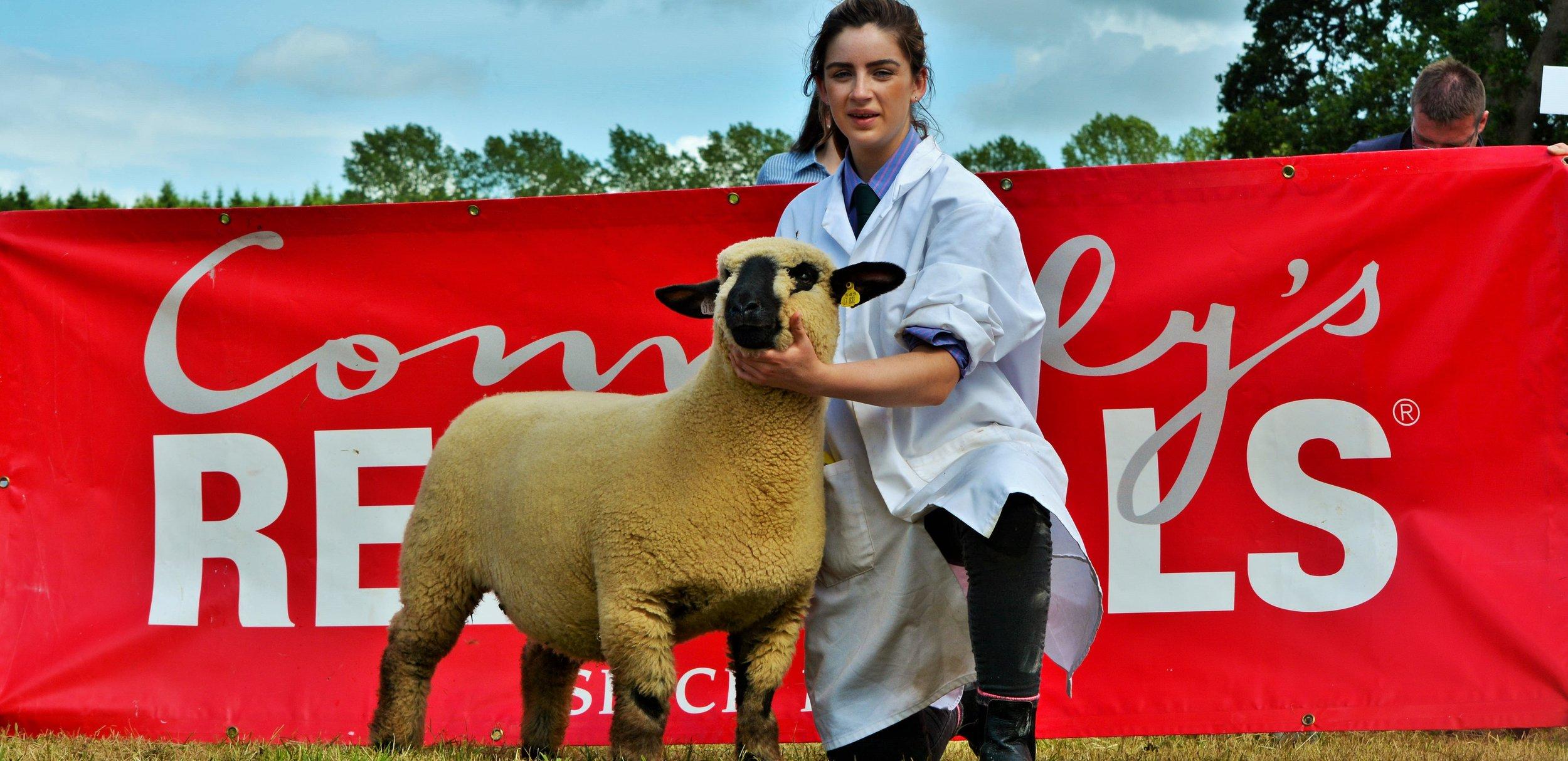 Ewe Lamb winner, Ballycreelly