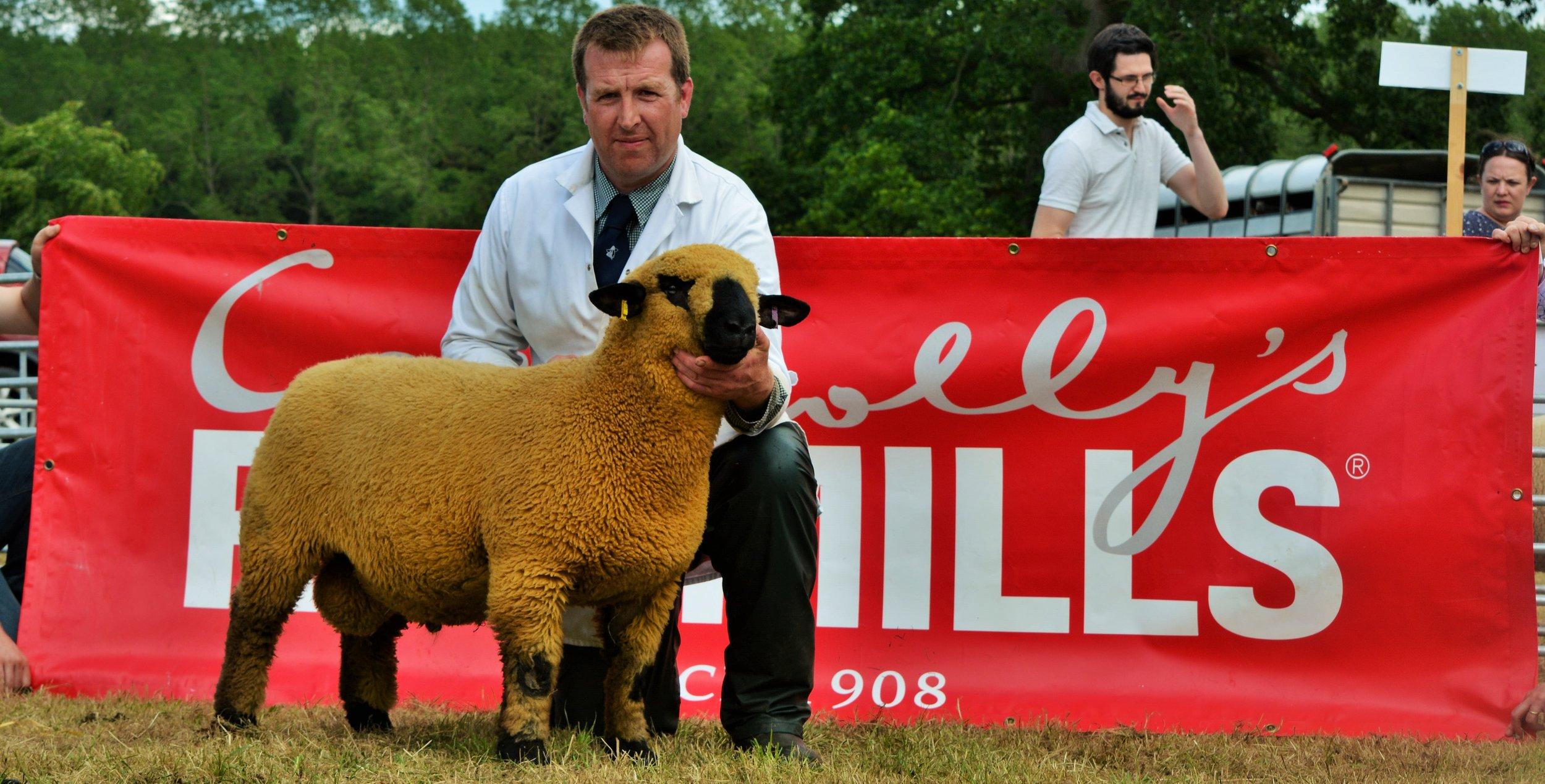 Untrimmed Ram Lamb winner, Glenbrook