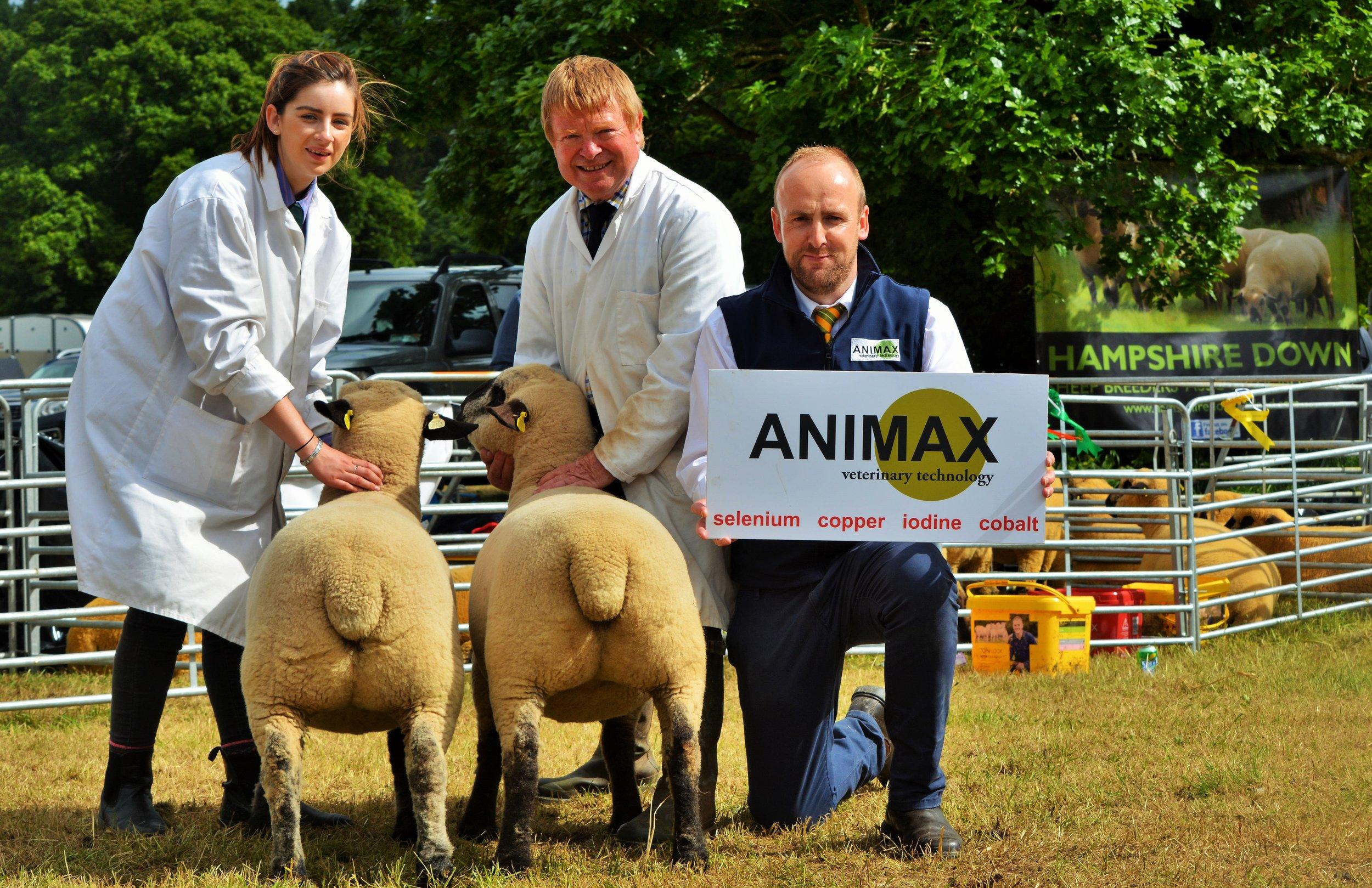 Pair Shearling Ewes, Ballycreelly